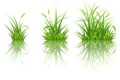 Green grass set Stock Images