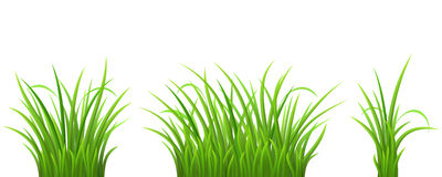 Green grass set Royalty Free Stock Photo