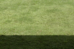 Green grass shade and shadow closeup Royalty Free Stock Photography