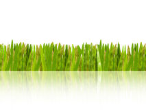 Green grass shadow Stock Photography