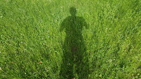 Green grass  shadow Royalty Free Stock Photography