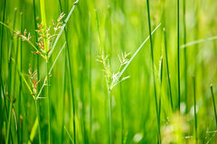 Green grass - shallow depth of field Royalty Free Stock Photography