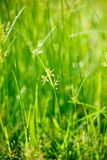 Green grass - shallow depth of field Royalty Free Stock Photos