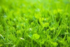 Green grass, shallow depth of field Stock Photography