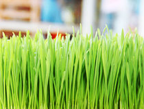 Green grass. Shallow depth  field Stock Photos