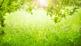 Green grass. Stock Photos