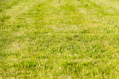 Green grass with shallow depth of field Stock Photo