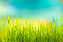 Green grass. Shallow depth of field Stock Images