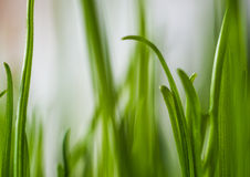 Green grass. Shallow depth of field Royalty Free Stock Photos