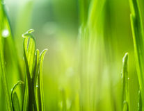 Green grass. Shallow depth of field Stock Image