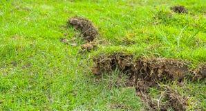 Green grass sheet Stock Photo