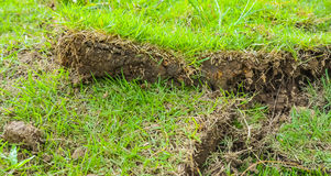 green grass sheet Royalty Free Stock Photography
