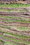 Green Grass Sheets As Layers. Stock Photo