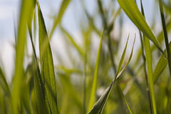 Through green grass shining background Stock Image