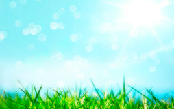 Green grass with shiny sun Stock Image