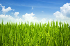 Green grass and sky royalty free stock images