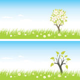 Green grass and sky. Green grass, tree and sky Royalty Free Stock Photography