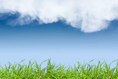 Green grass and sky. Green grass and blue sky Royalty Free Stock Photo