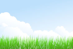 Green grass and sky. Background with fresh green grass Royalty Free Stock Photography