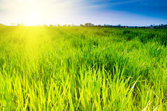 Green grass and sky Royalty Free Stock Image