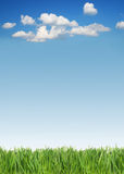 Green grass and sky. Green grass and blue sky with some clouds royalty free stock image
