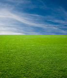 Green Grass and Sky Stock Image
