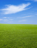 Green Grass and The Sky Royalty Free Stock Images