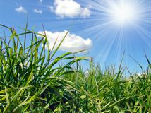 Green grass and sky royalty free stock photo