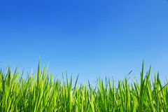 Green Grass On A Sky Background Royalty Free Stock Images