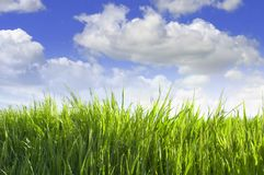 Green grass on sky background. Green grass against blue cloudy sky background stock image