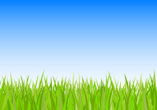 Green grass and sky background Stock Photo