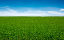 Green grass and sky, background. Green grass and sky with clouds, sunny day, background Stock Photography