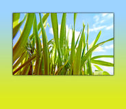 Green Grass on Sky Background in Spring Frame. Green grass with drops of dew on blue sky background in a beautiful frame. Please visit my portfolio for more Stock Photos