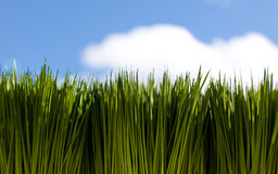Green Grass and sky Royalty Free Stock Photos