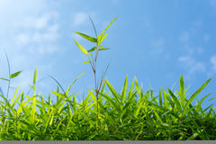Green grass and sky Royalty Free Stock Photography