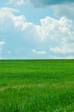 Green Grass and  sky with clouds Royalty Free Stock Image