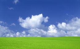 Green grass and sky with clouds. Royalty Free Stock Image