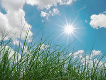 Green grass, sky, clouds and sun. In nature Stock Images