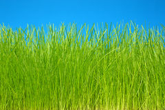 Green grass & sky eco-friendly background royalty free stock image