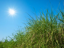 Green grass, sky and sun Stock Photography