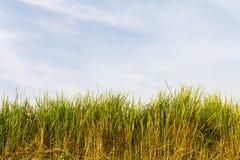 Green grass sky Royalty Free Stock Photo