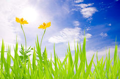 Green grass sky and yellow flower Stock Photography