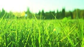 Green grass dolly in. Green grass slider dolly in stock video