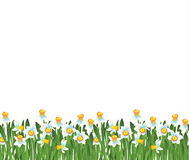 Green grass with small blue narcissus flowers isolated on white. Vector illustration Royalty Free Stock Images