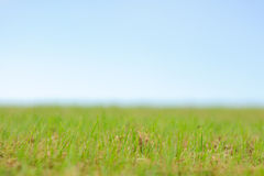 Green grass smooth sky background Royalty Free Stock Photo