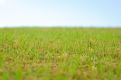 Green grass smooth sky background. Texture Royalty Free Stock Image