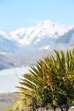 Alps with grass in snow mountain peak New Zealand. Green grass with snow in mountain peak alps in New Zealand royalty free stock photos