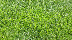 Green grass soccer field Stock Image