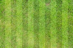 Green grass soccer. Field background Stock Photos
