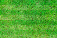 Green grass soccer. Field background Royalty Free Stock Images